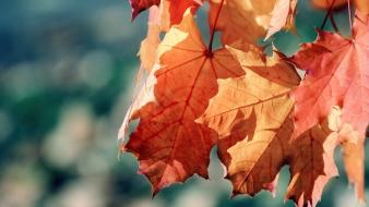 Nature leaves seasons autumn Wallpaper