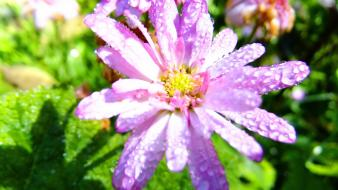 Plants sunlight water drops macro pink flowers wallpaper