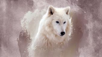 Snow white animals mammals wolves wallpaper