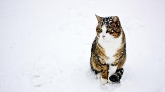 Snow white cats animals outdoors wallpaper