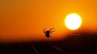 Sun insects silhouettes spiders spider webs wallpaper