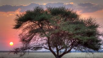 Sunset nature africa botswana wallpaper