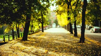 Trees leaves roads autumn wallpaper