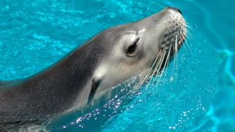 Water seals animals wallpaper