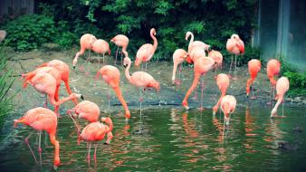 Animals flamingos zoo wallpaper