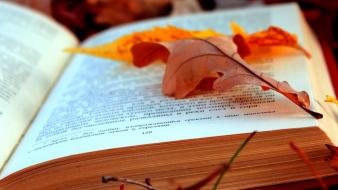 Autumn (season) text leaves foliage pages wallpaper