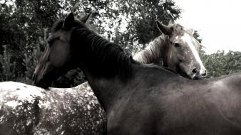 Black and white animals horses wallpaper