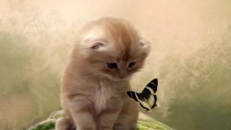 Cats kittens butterflies wallpaper