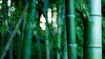Green nature bamboo plants wallpaper