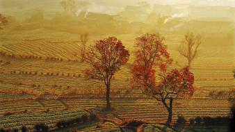 Landscapes china fields sunlight farmland bing wallpaper