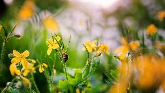 Landscapes nature flowers yellow spring Wallpaper