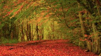 Landscapes nature red leaves earth carpet autumn wallpaper