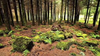 Landscapes nature trees wood stones moss branches wallpaper