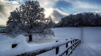 Landscapes nature winter snow protection wallpaper