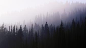 Landscapes nature wood fog darkness background wallpaper