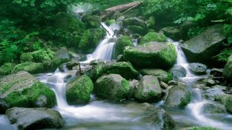 Landscapes nature wood stones moss branches Wallpaper