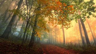 Landscapes trees forest magic roads autumn wallpaper