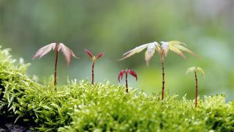 Moss sprouts wallpaper