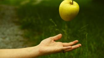 Nature hands grass arm apples wallpaper