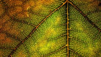 Nature leaf leaves macro structure Wallpaper
