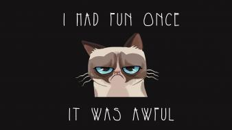Quotes meme artwork grumpy cat tarder sauce wallpaper