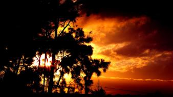 Sun trees morocco sundown orange sky tiznit wallpaper