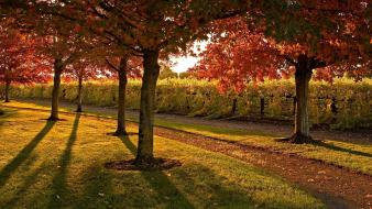 Trees leaves garden lawn evening footpath autumn wallpaper