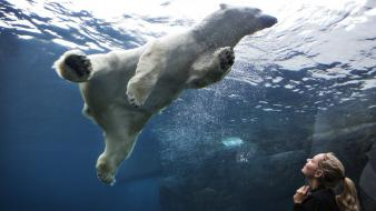 Aquarium underwater polar bears wallpaper