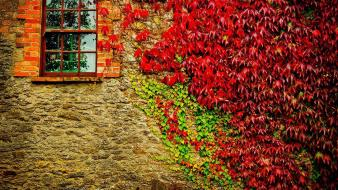 Autumn (season) wall houses plants vegetation windows suburbia wallpaper