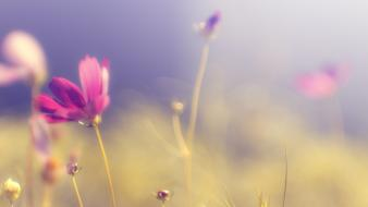 Flowers blurred background wallpaper