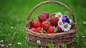 Flowers grass strawberries baskets spring wallpaper