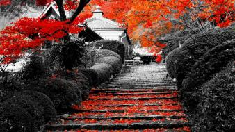 Japan leaves kyoto selective coloring wallpaper