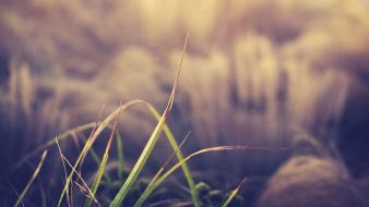 Nature grass blurred background wallpaper