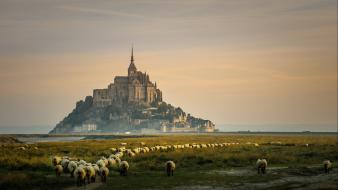 Sunrise landscapes nature castles animals grass france sheep Wallpaper