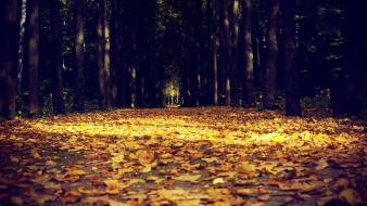 Trees path fallen leaves wallpaper