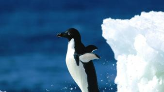 Water ice nature wildlife penguins wallpaper