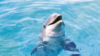 Water ocean animals dolphins sea wallpaper