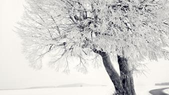 Winter snow trees branches wallpaper