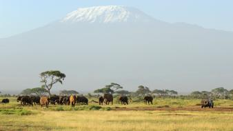 Animals elephants africa safari mount kilimanjaro wallpaper