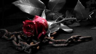 Dark metal gothic chains roses wallpaper