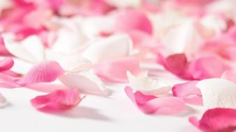 Flowers pink flower petals wallpaper