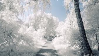 Landscapes nature winter snow trees roads wallpaper