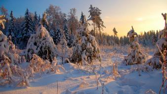 Landscapes winter snow trees forest wallpaper