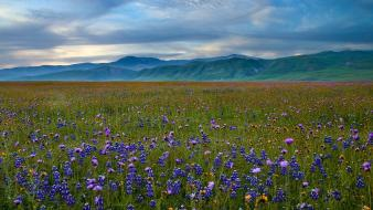 Mountains landscapes nature california meadows blue flowers wildflowers wallpaper
