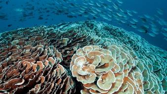 National geographic underwater coral reef fishes sea wallpaper