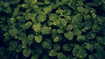 Nature leaves water drops green plant dark Wallpaper