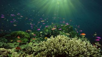 Ocean fish underwater sea Wallpaper