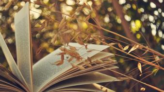Plants books sunlight depth of field wallpaper