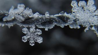Snow snowflakes frost macro hoarfrost Wallpaper