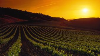 Sunset landscapes nature california napa valley wallpaper